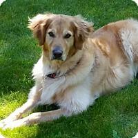 Adopt A Pet :: Duke - Vancouver, WA