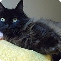 Adopt A Pet :: Matilda - Portland, OR