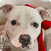 Adopt A Pet :: Pearl - Tallahassee, FL