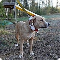 Adopt A Pet :: Snowy - Albemarle, NC