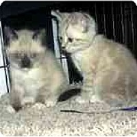 Adopt A Pet :: Tara & Sara - Arlington, VA