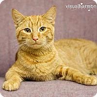 Adopt A Pet :: Keiko - Phoenix, AZ