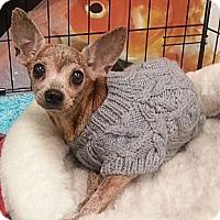 Adopt A Pet :: Kay - geneva, FL