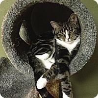 Adopt A Pet :: Nathaniel - Hyde Park, NY