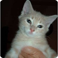 Adopt A Pet :: Buttercup - Troy, OH