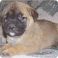 Adopt A Pet :: Kat - Chandler, IN