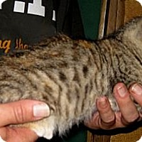 Adopt A Pet :: Tattoo - Dallas, TX