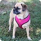 Adopt A Pet :: Annabelle