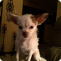 Adopt A Pet :: Bingo - Edmond, OK