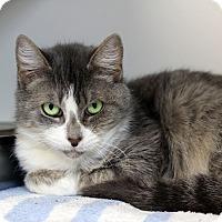 Adopt A Pet :: Metzy - Tinton Falls, NJ