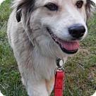 Adopt A Pet :: Lizzie