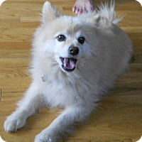 Adopt A Pet :: KuJo - dewey, AZ