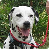 Adopt A Pet :: Teddy - Turlock, CA
