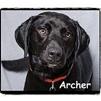 Adopt A Pet :: Archer - Warren, PA