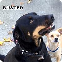 Adopt A Pet :: Buster - Lindsay, CA