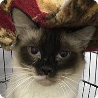 Adopt A Pet :: Snowball - Winchester, CA