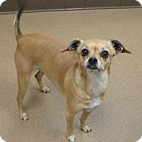 Adopt A Pet :: Ruby - Las Vegas, NV