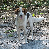 Adopt A Pet :: Sami - Lake Pansoffkee, FL