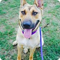 Adopt A Pet :: Kaelan - Atlanta, GA