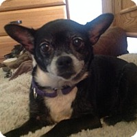 Adopt A Pet :: Rosie - Harrisburg, PA