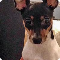 Adopt A Pet :: Baby Girl (& Bonnie) - Arlington, VA