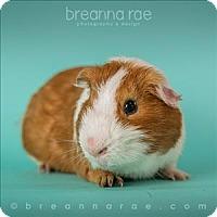 Adopt A Pet :: Waffle - Sheboygan, WI