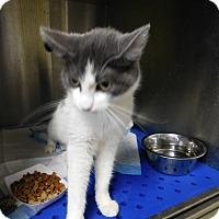 Adopt A Pet :: BLAISE - Houston, TX