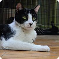 Adopt A Pet :: Oreo - Brooklyn, NY