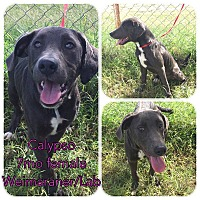 Adopt A Pet :: Calypso - DeForest, WI