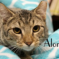 Adopt A Pet :: Alonso - Wichita Falls, TX