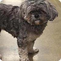 Adopt A Pet :: Precious (Pup Pup) - Orlando, FL