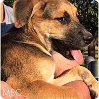 Adopt A Pet :: Meg - DeForest, WI