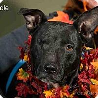 Adopt A Pet :: NICOLE - Santa Fe, NM