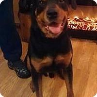 Adopt A Pet :: Dozer - Rexford, NY