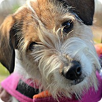 Adopt A Pet :: DAISY - Linden, NJ