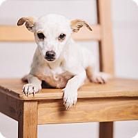 Adopt A Pet :: Cricket - Portland, OR