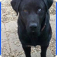 Adopt A Pet :: Sam - Elburn, IL