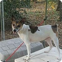 Adopt A Pet :: Dylan - Blountstown, FL