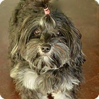 Adopt A Pet :: Olivia - San Antonio, TX