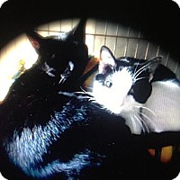 Adopt A Pet :: LuLu and Layla - Menomonee Falls, WI