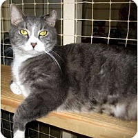 Adopt A Pet :: Eddie - Deerfield Beach, FL