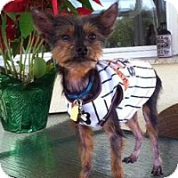 Adopt A Pet :: Tim-E - Gulfport, FL