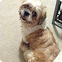 Adopt A Pet :: Griffin ~ Adoption Pending - Youngstown, OH