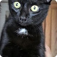 Adopt A Pet :: Gabby - Seminole, FL