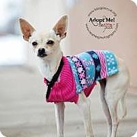 Adopt A Pet :: Amber Lee - Shawnee Mission, KS