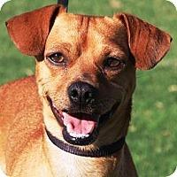 Adopt A Pet :: Drake - Gilbert, AZ