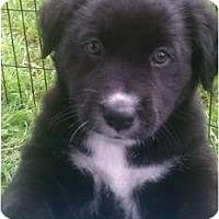 Adopt A Pet :: Coco - Justin, TX
