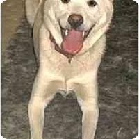 Adopt A Pet :: Jinju - Southern California, CA