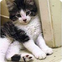 Adopt A Pet :: Crash - Irvine, CA