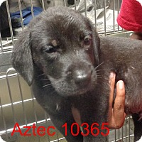 Adopt A Pet :: Aztec - baltimore, MD